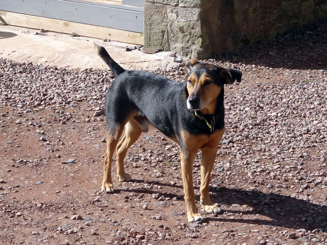 While I worked hard in the Bothy, Mix wandered outside to enjoy the sunshine