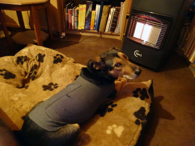 Dog Bed Heater Tractor Supply