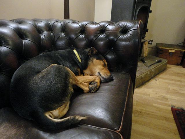 Mount Pleasant Dog Kennels Doncaster