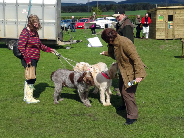 Dog Walk Volunteer Torrance